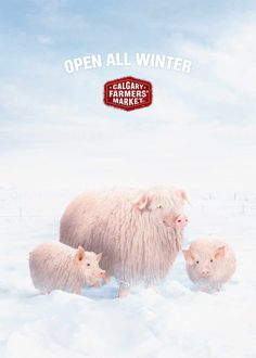 Calgary Farmers' Market: Pigs | Ads of the World™
