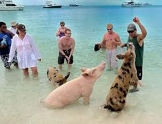 Beach vacation. TOP 25 Funny Pictures on the beach