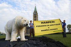 Mai 2013 : Le Canada prend la présidence du Conseil de l'Arctique, ce forum international originalement mis en place pour assurer la santé et le développement soutenable de cette région fragile. Or le gouvernement Harper affirme vouloir utiliser cette organisation pour promouvoir les intérêts de l'industrie pétrolière.  Signez la lettre demandant à Stephen Harper de mettre son agenda pétrolier de côté et d'interdire les forages en Arctique --> www.greenpeace.ca/petitionArctique