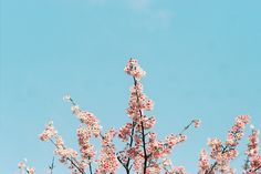 024 by HanPo Lin on Flickr.