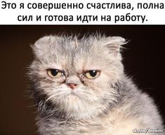 БОЛЬШИЕ Открытки на стену ! Animals And Pets, Funny Animals, Hissy Fit, Funny Expressions, Man Humor, Funny Cats, Haha, Dog Cat, Funny Pictures