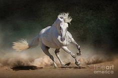 Horse Mane, Andalusian Horse, Friesian Horse, Arabian Horses, Majestic Horse, Beautiful Horses, White Horses, Art Mural, Horse Breeds