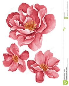 Illustration about Watercolor illustration flowers in simple background. Illustration of branch, graphic, illustration - 35681383 Simple Watercolor Flowers, Easy Watercolor, Simple Flowers, Floral Watercolor, Watercolour, Peony Painting, Fabric Painting, Watercolor Paintings, Illustration Blume