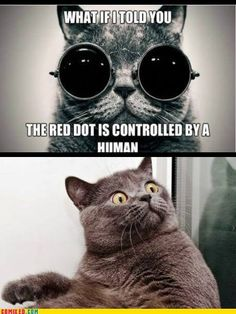 "LOL! From ""My Other Ride Is Your Mom"" #cats #thematrix #caturday"