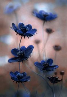 Hottest Free of Charge Blue Flowers photography Ideas Will you be holding an outdoor in the backyard? People unquestionably target to make it livelier plus more in My Flower, Pretty Flowers, Wild Flowers, Exotic Flowers, Photos Of Flowers, Flower Pictures, Cosmos Flowers, Blue Pictures, Garden Pictures