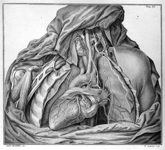 Nerves of the heart and pharynx by Antonio Scarpa, 18th century.