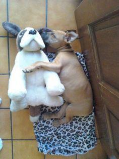 staffy cuddles.