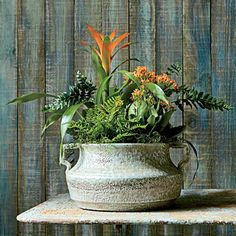 Indoor Container Gardening Ideas: Combining plants of similar colors forms a cohesive look.