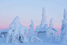 Posio, Lapland, Finland, photo by Tiina Törmänen Winter Szenen, Lapland Finland, Conifer Trees, Arctic Circle, Samos, Next Holiday, Winter Photography, Bored Panda, Holiday Destinations