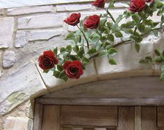 Picture only-Roses on a stone building