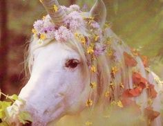 Rey says: it has really pretty flowers and I like how it has a pretty mane and I like because it is purplish whitish and it has a long horn that is very shiny and gold (breathe)