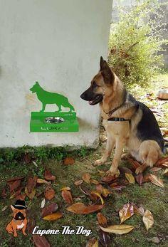 Comedero de pared para pastor alemán. Colocado a la altura del pecho de tu perro beneficiará su salud.