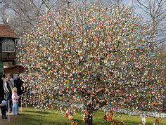Now that's ONE- Crazy, Huge Easter egg tree!! hmmmm @Shannon Day wonder how long it would take to do this to my tree!