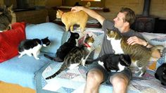 In the past 24 years The Cat House on the Kings as rescued over cats! … It's truly an amazing sanctuary that saves so many lives :) What did you think of this cat sanctuary? Funny Cat Videos, Funny Cats, Cat Behavior, Cat Health, Thing 1, Cute Gif, Beautiful Cats, Dog Pictures, Cats And Kittens