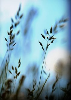 grass blues | carlein #photography | via iphoneart