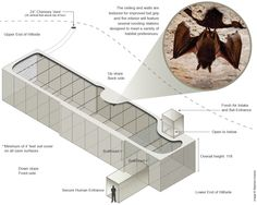 An illustration depicting the proposed artificial bat cave. Image: The Nature Conservancy