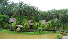 Abai Jungle Lodge, Borneo   Black Tomato