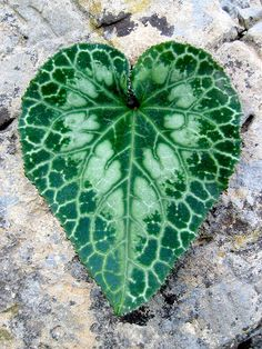 hearts in nature