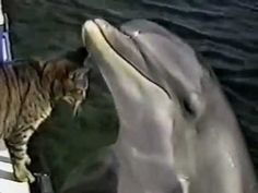 Cat and Dolphin Playing Together  ~ Sooo Sweet ~  MUST SEE!