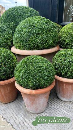 Stories • Instagram Garden Planters, Herbs, Plants, Instagram, Random, Flower Planters, Herb, Garden Container, Plant