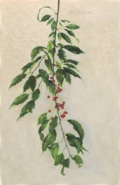 Jodie Kain | Pin Cherry Vanitas | pastel | 11x16 | 2020 Vanitas, Plant Leaves, Cherry, Pastel, Contemporary, Drawings, Artwork, Plants, Painting