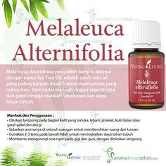 Melaleuca Alternifolia atau Tea Tree Oil