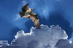 Catch of the Day by antonyz #nature