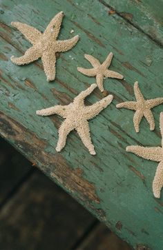 Awesome Starfish Collection (10 Pics) Part 2   See More Pictures   #SeeMorePictures