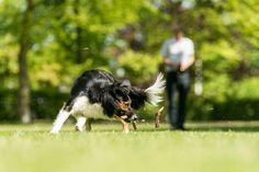 Animal dier animals dieren dog hond dogs honden running rennen huisdier pet pets spelen playing play