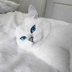 這隻「擁有全世界最美藍色眼睛」的可愛白貓讓26萬網友都迷上了,看到陽光投射到他眼裡的完美畫面也會讓你愛上!% 照片