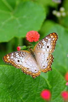 Butterfly with Pretty Patterns