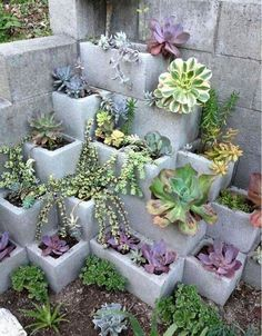 Great garden bed idea for planting succulents or even strawberries