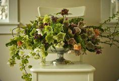 hellebores bella fiori unnamed