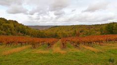 Couleurs d'automne en vallée du Lot https://photos.thierry-dollon.net?utm_content=bufferd1491&utm_medium=social&utm_source=pinterest.com&utm_campaign=buffer #followme #thierrydollon #photodujour #lot #sudouest #cahors #valleedulot