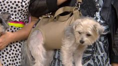 Bobbie's Buzz: Puppy purses, canine cocktails and more fun dog products
