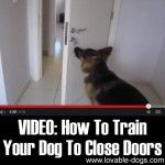 An Kety Pet Care. Get Your Dog Trained Today With These Simple Tips. Training your dog is important for an obedient relationship between you and your canine friend. During the training process, you and your dog will experien Service Dog Training, Training Your Puppy, Service Dogs, Dog Training Tips, Training Classes, Training Online, Training School, Training Videos, Potty Training