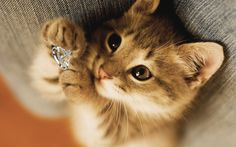 King Greek Cat Day: Alpha Kappa Alpha Jewelry and more on Flash Sales!