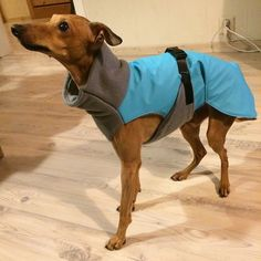 Whippet/greyhound raincoat tutorial