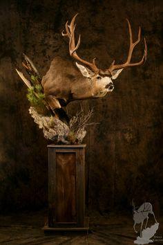 Deer Hunting Decor, Mule Deer Hunting, Whitetail Deer Hunting, Taxidermy Decor, Taxidermy Display, Bird Taxidermy, Deer Mount Decor, Deer Decor, Deer Shoulder Mount