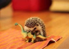 hedgie playing with a dinosaur :)