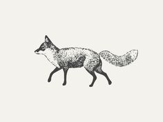Style of drawing, fox