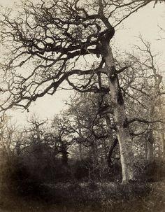 eugène cuvelier, étude d'arbre, carrefour de l'épine, vers 1860