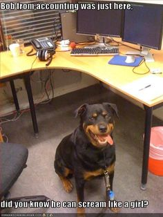 rottwiler with caption | Bob from accounting was just here, did you know he can scream like a ...