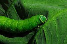 A Trace on Green by Linn Smith, via 500px