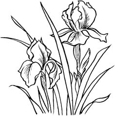 Irises coloring page from Iris category. Select from 21195 printable crafts of cartoons, nature, animals, Bible and many more.