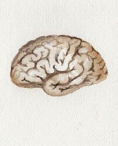aquarelle cerveau, 2012