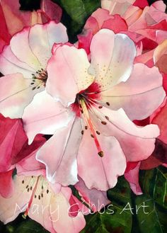 Watercolor - Pink Rodies | Mary Gibbs Art                              …