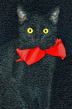 Red Ribbon Cat by Diana Angstadt