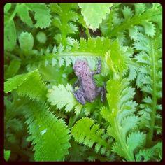 Så er haven propfyldt med mini-tudser og babyfrøer igen. Herbs, Photo And Video, Mini, Instagram, Herb