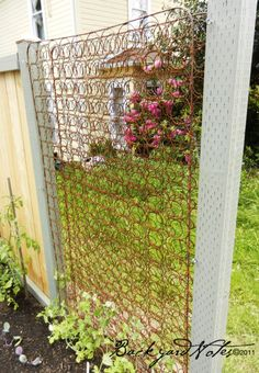 Mattress springs trellis #Recycled, #Trellis  Great for the first year but tidying up in the fall would be rough.
